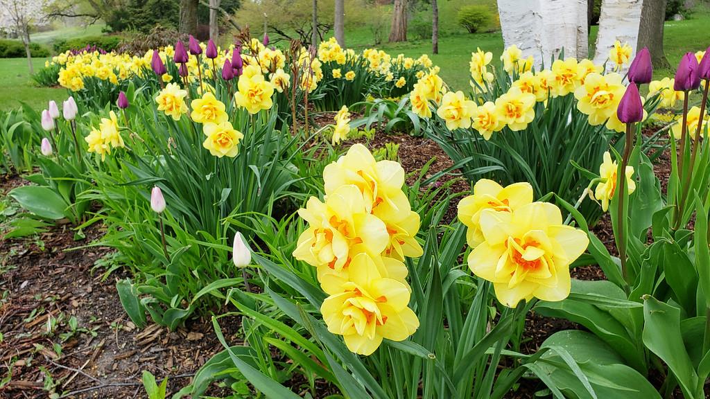 Fleurs à High Park Toronto