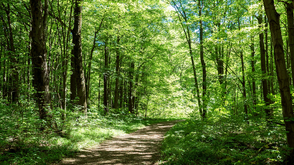 Red Oak Trail at Hilton Falls Conservation Area