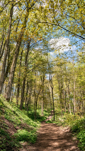 Jeju Olle - Bruce Trail Friendship Trail