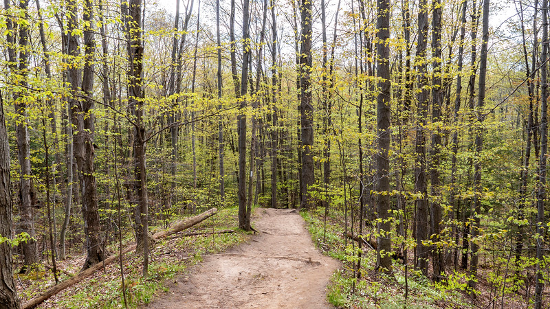 Bruce Trail at Hockley Valley