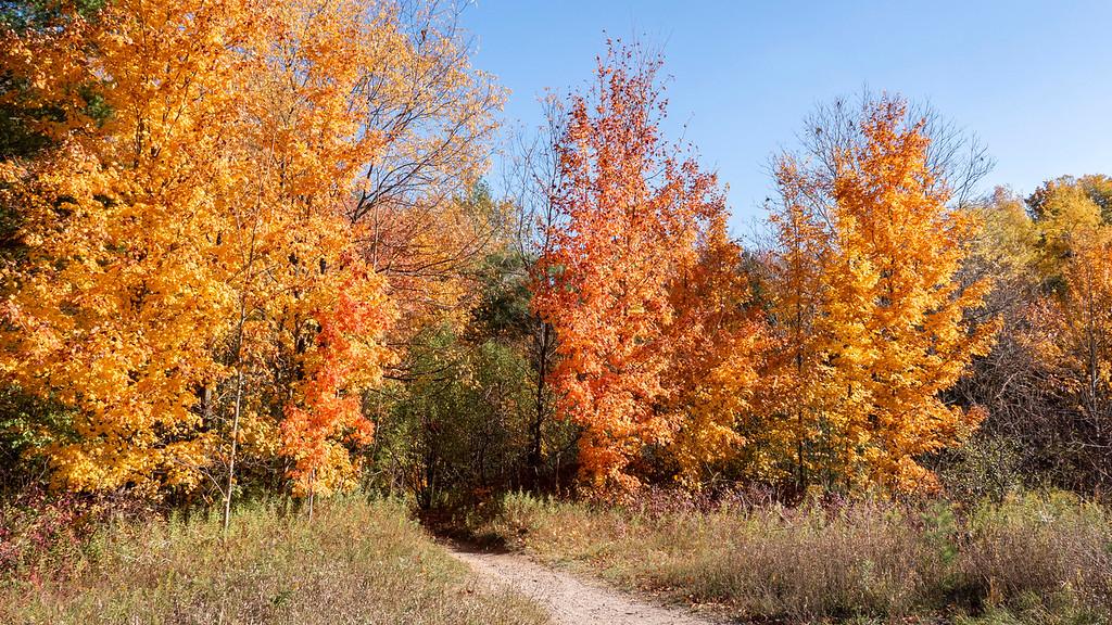 Woodland Trail Kitchener