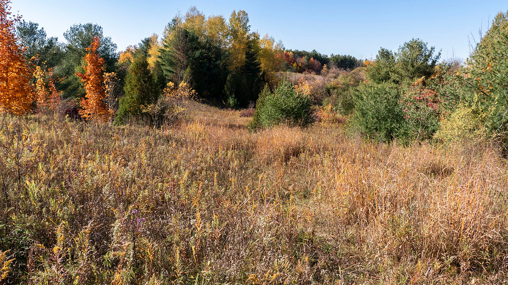 Meadow Trail views at Huron Natural Area Kitchener Ontario