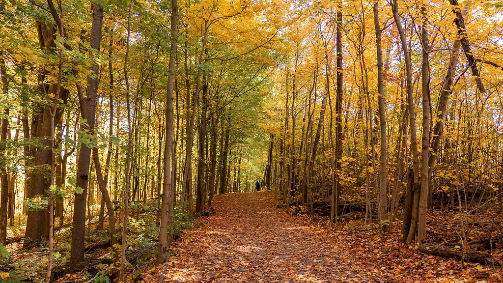 Strasburg Creek Trail Kitchener