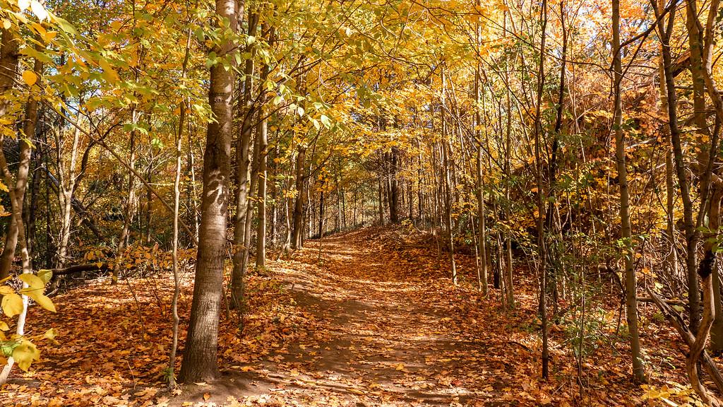 Woodland Trail Kitchener - Huron Natural Area