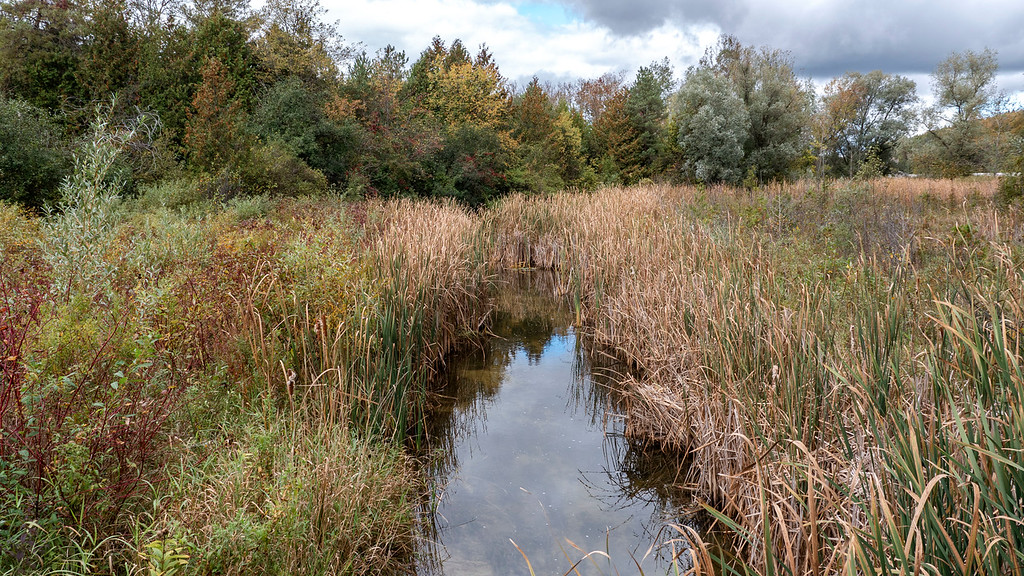 Wetlands Orangeville Ontario