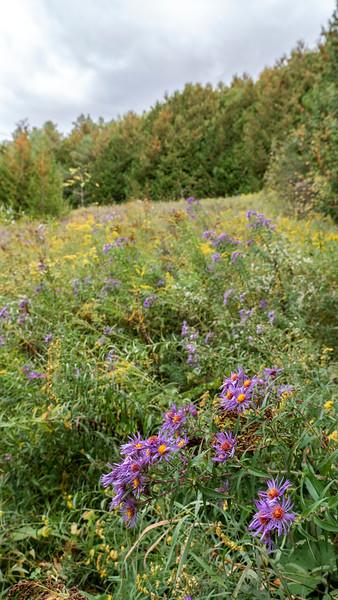 Meadows in Orangeville Ontario