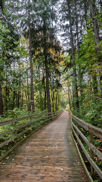 Island Lake Conservation Area boardwalks and forest