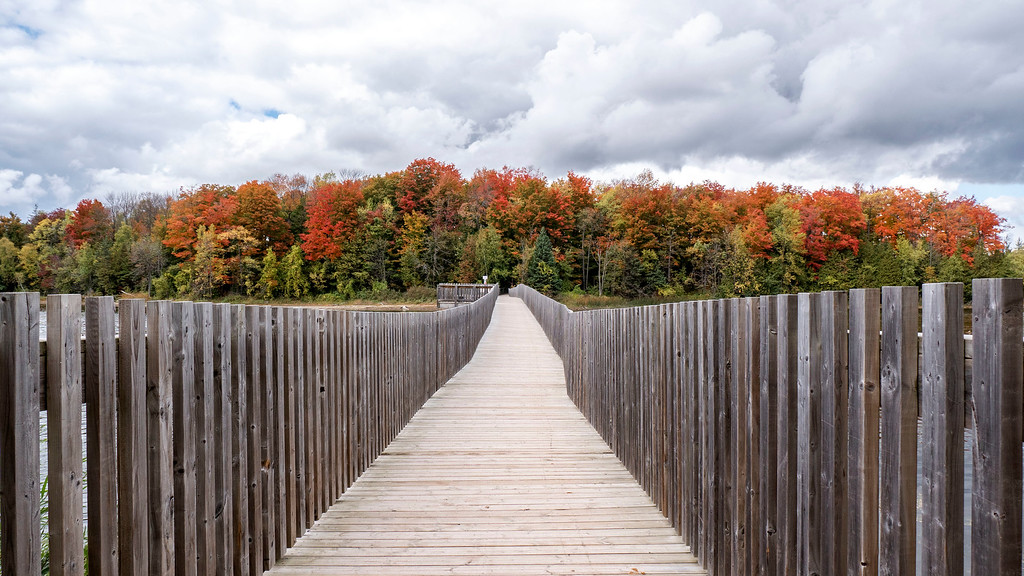 Walking across the bridge at Island Lake Conservation Area