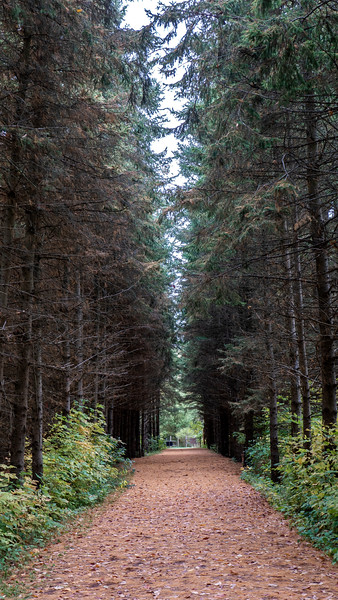 Vicki Barron Lakeside Trail
