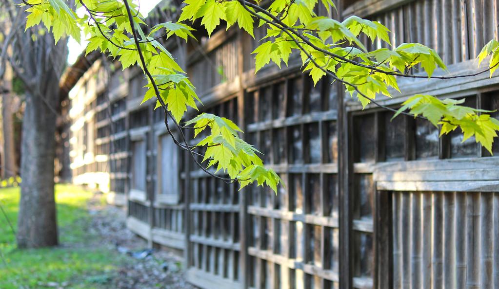 Japanese garden near Toronto