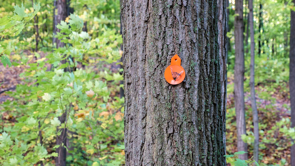 Red Oak Trail