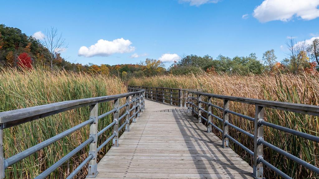 Wetland Trail Burlington