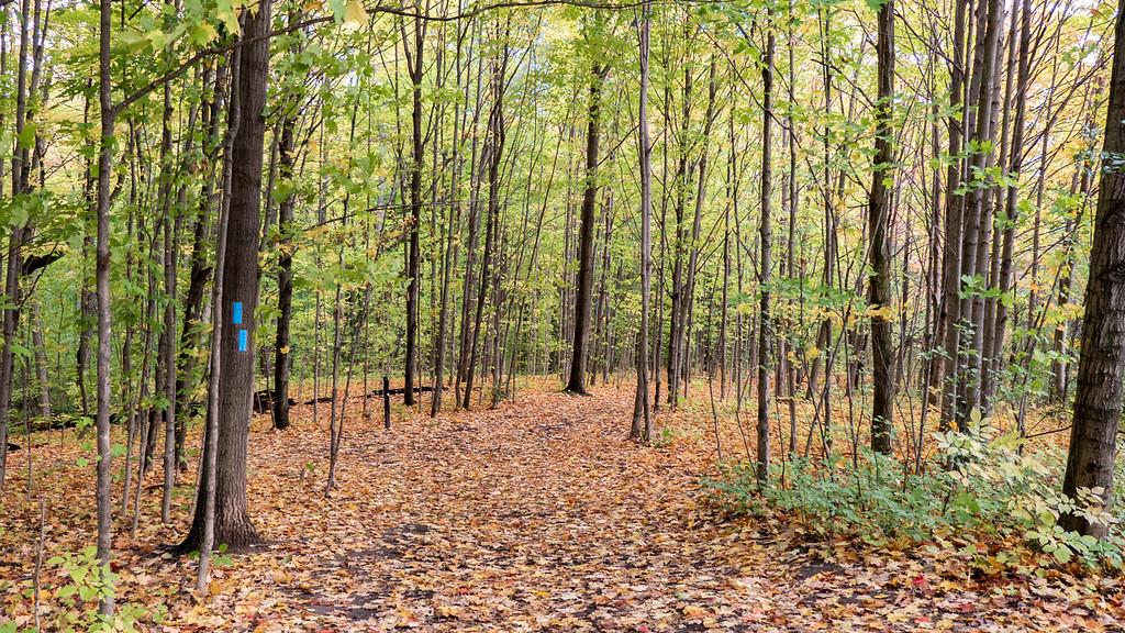 Hiking in Burlington Ontario