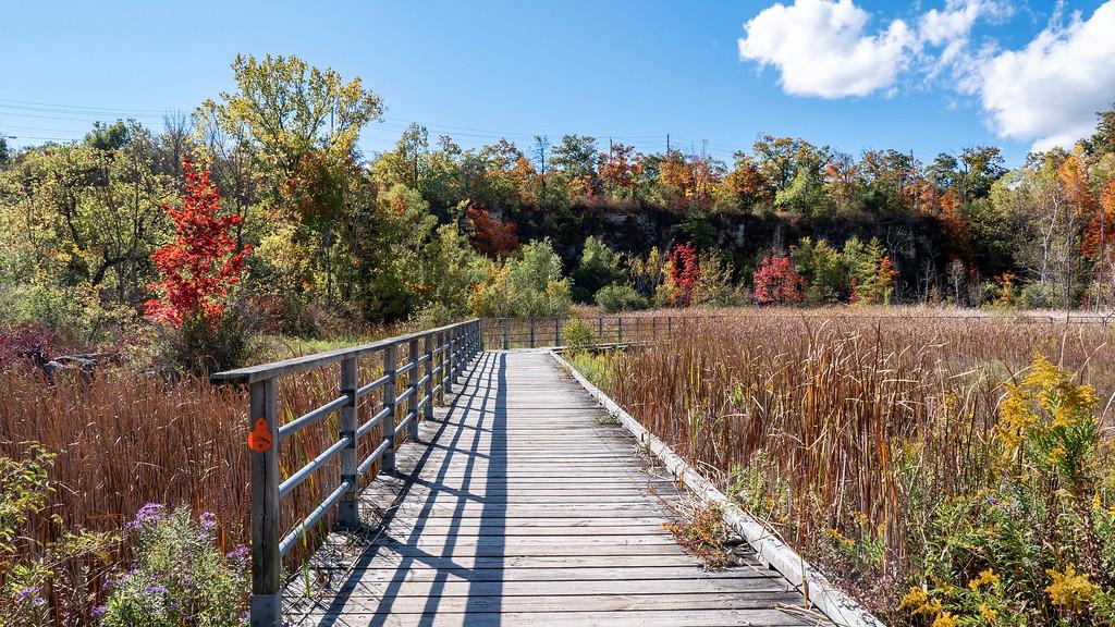 Wetland Trail in Burlington
