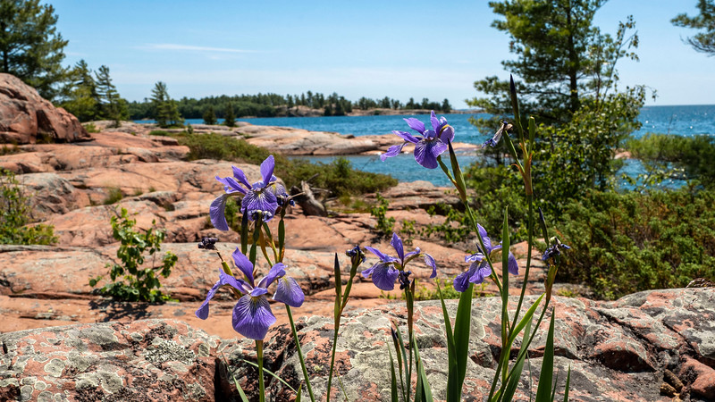 Flowers and pink granite rocks