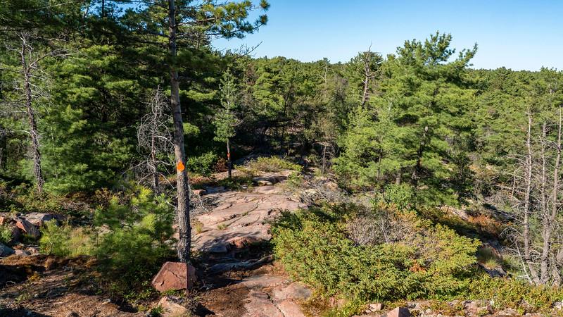 Forest trail in northeastern Ontario