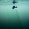 Underwater plant in a lake at Killarney Provincial Park in Ontario, Canada