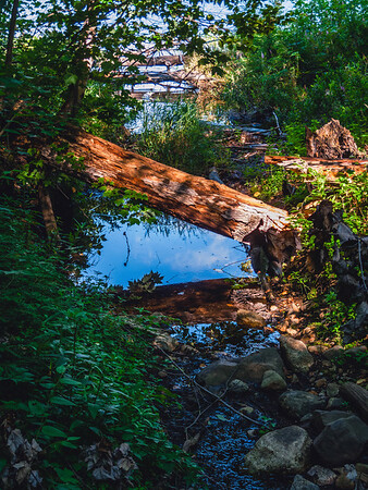 Nature, Killarney Provincial Park, Ontario
