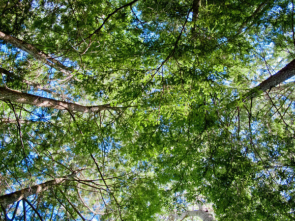 Trees, Killarney Provincial Park, Ontario