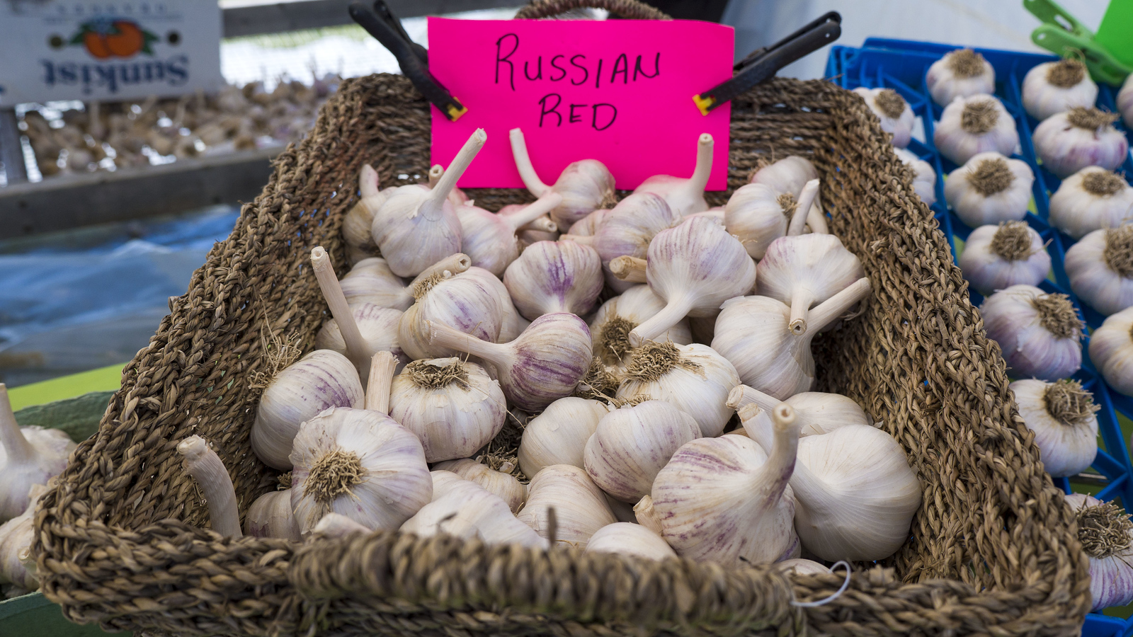 The Perth Garlic Festival - Perth, Ontario, Canada