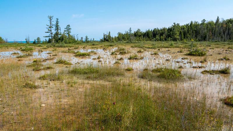 Marl Wetland