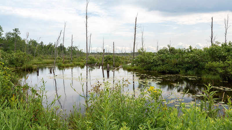 Tower Trail wetlands