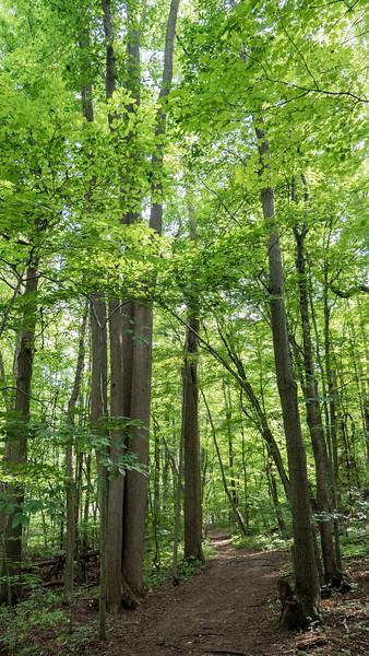 Carolinian Forest - Niagara peninsula