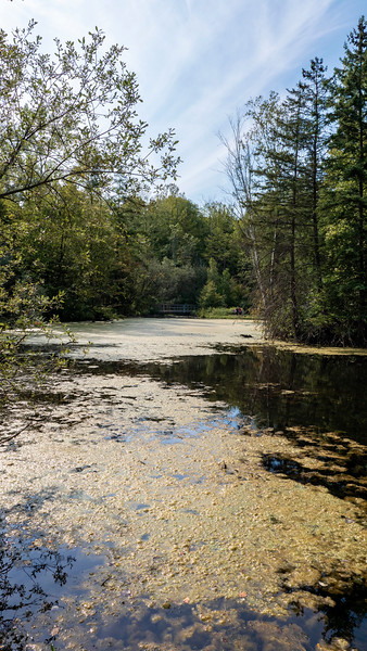 The pond trail at St Johns Conservation Area - fishing pond