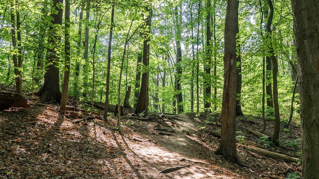 Niagara region hiking trails