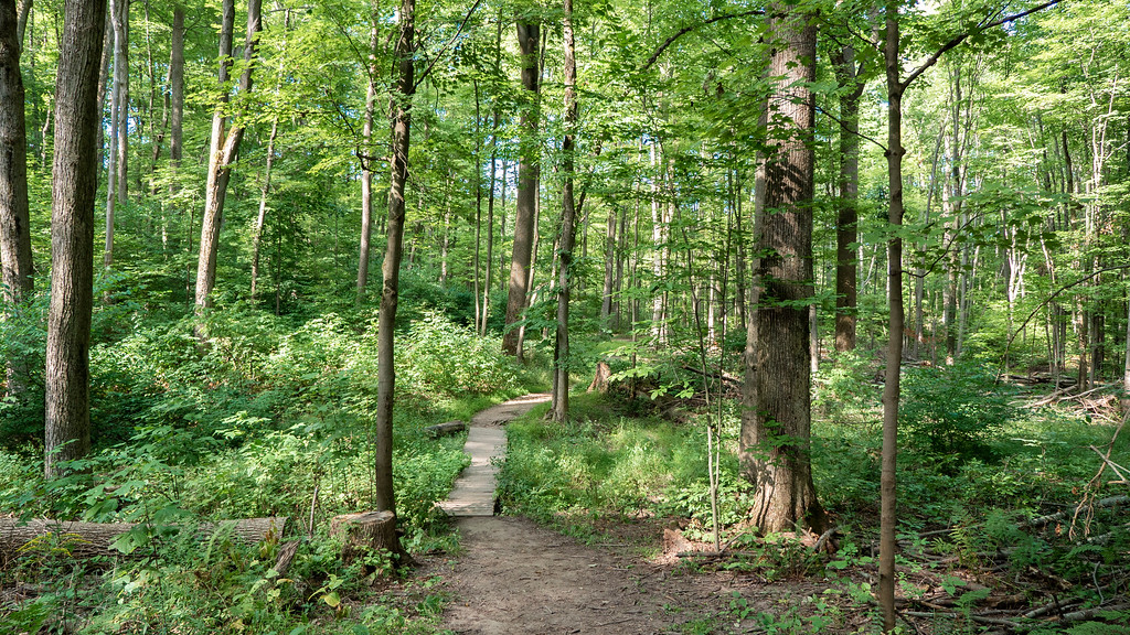 St Johns Conservation Area trails