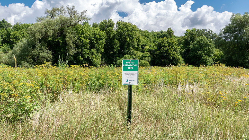 Habitat Restoration Area in East Gwillimbury