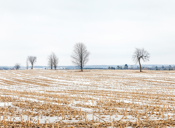 Trees and landscape in Ontario