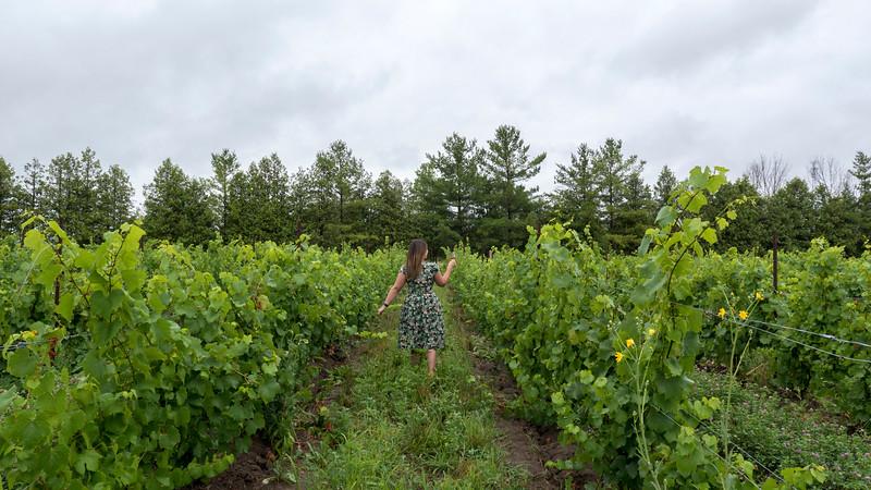 Strolling the vineyards at Dark Horse Estate Winery in Grand Bend, Ontario, Canada. Emerging wine region of Ontario's Blue Coast.