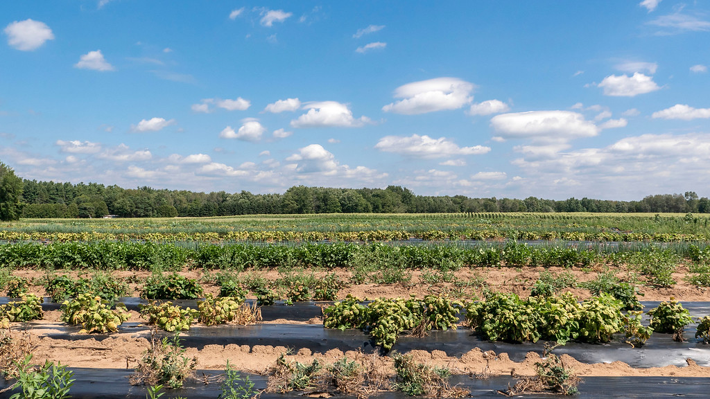 Thames River Melons - Pick your own fruits and vegetables in Woodstock Ontario