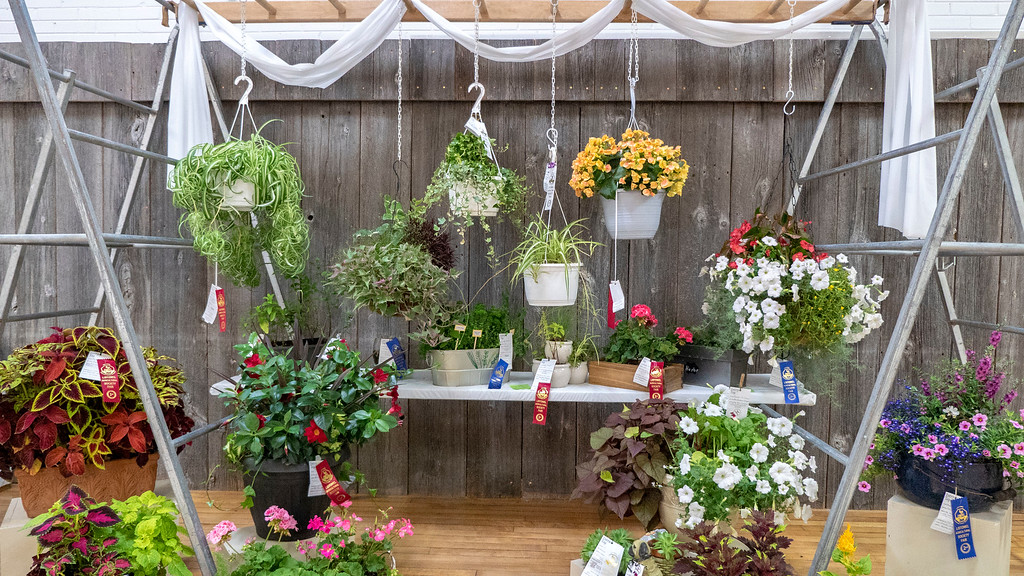 Listowel Agricultural Fair prizes for flower hanging baskets - Perth County Ontario