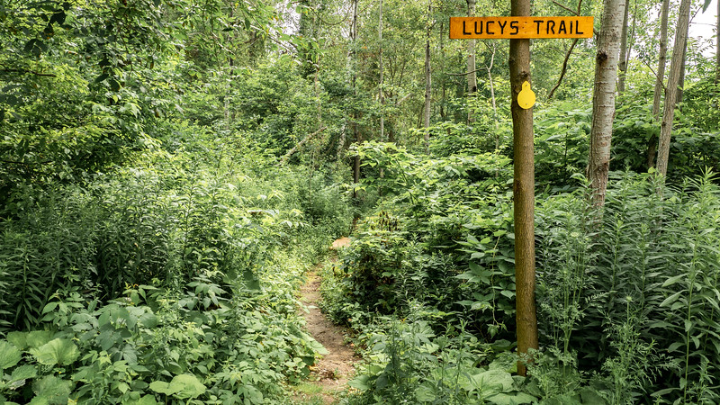 Lucy's Trail