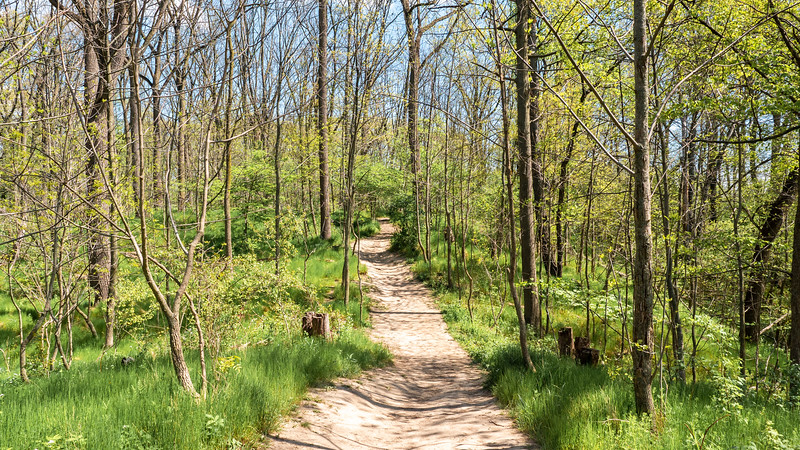 Ginger Valley Trail