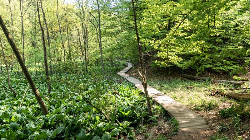 Princess Point Trails - Caleb's Walk