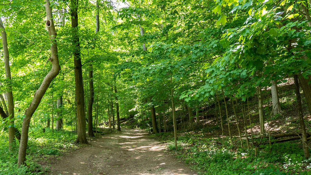Mississauga hiking trails - Riverwood Conservancy / Culham Trail