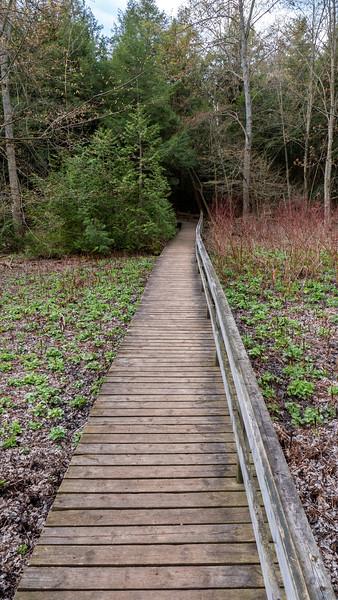 Boardwalk at Robert Edmondson Conservation Area