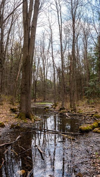 Robert Edmondson Conservation Area in Milton Ontario