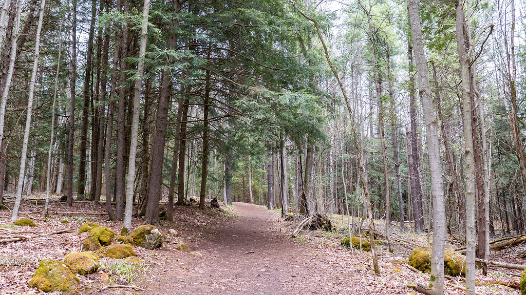 Robert Edmondson Conservation Area