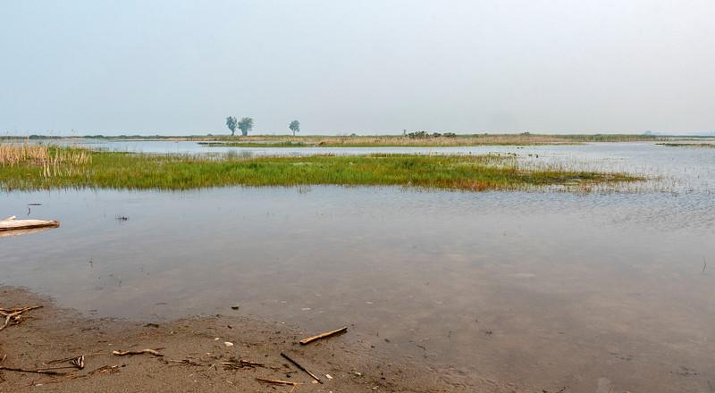 Wetlands at South Beach