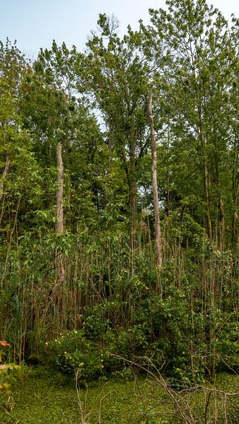 Spicebush Trail