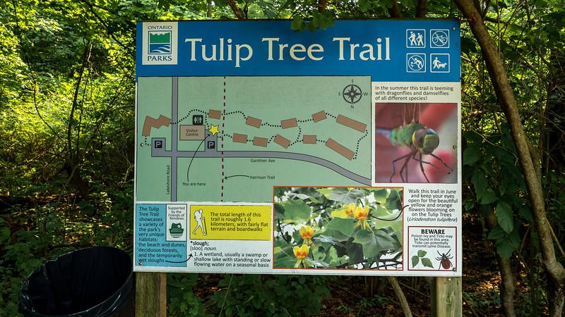 Tulip Tree Trail