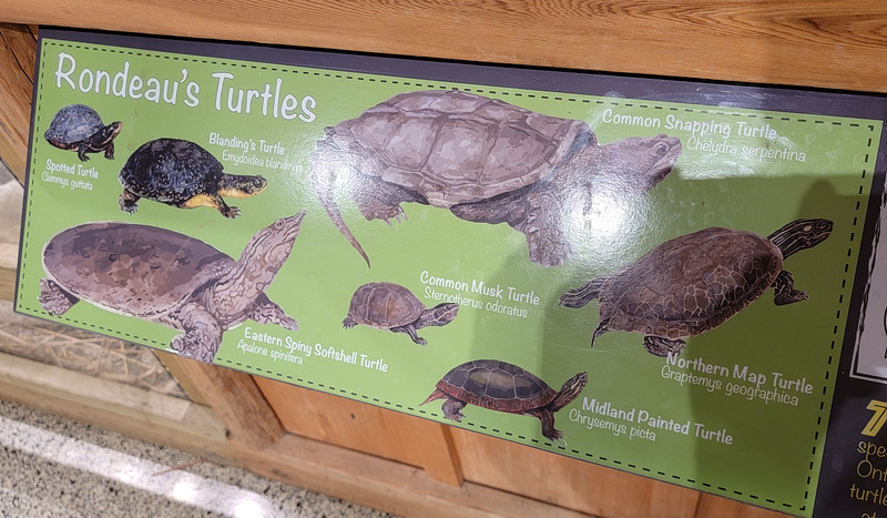 Rondeau's Turtles