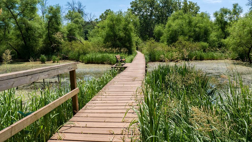 Shallow marsh boardwalks