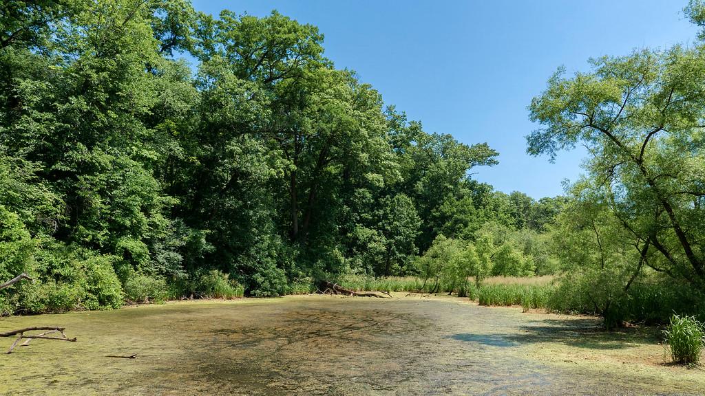 Grindstone Marsh at the RBG