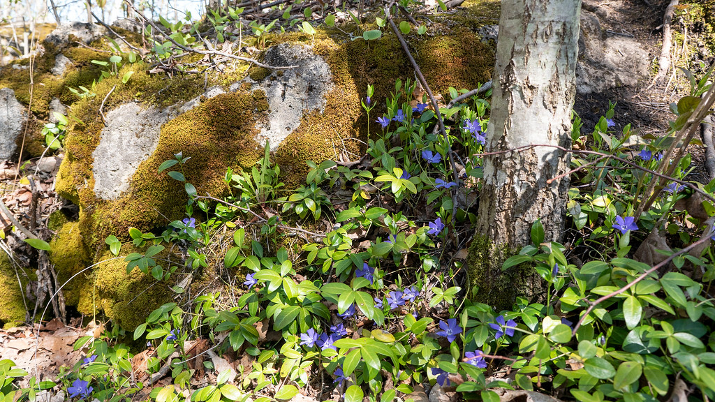Flowers and mossy rocks on the trail