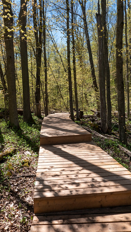 Roberts Side Trail boardwalk
